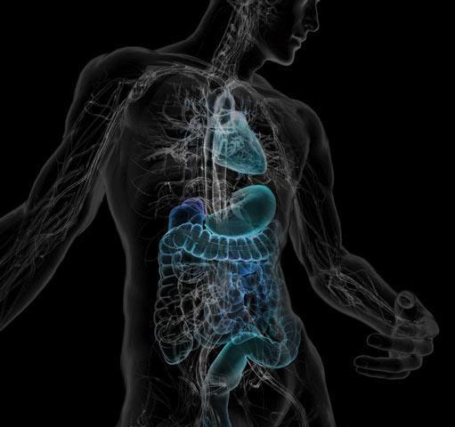 cuerpo-humano-medicina-interna-ozonoterapia